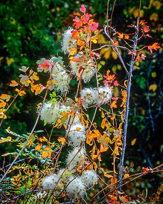 Photograph - Foliage Twisted Colored Leaves by John Brink