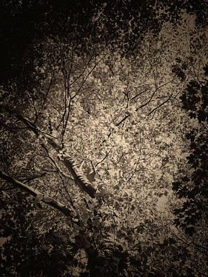 Foliage Print by Wim Lanclus