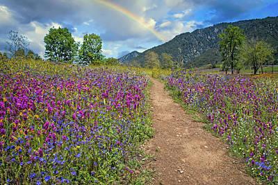 Photograph - Follow Every Rainbow by Lynn Bauer