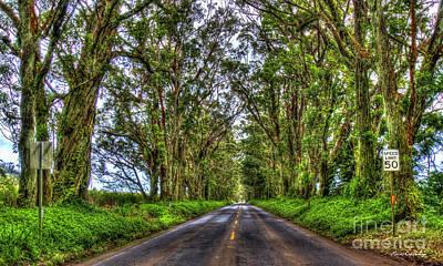 Photograph - Follow Me Eucalyptus Tree Tunnel Kauai Hawaii Collection Art by Reid Callaway