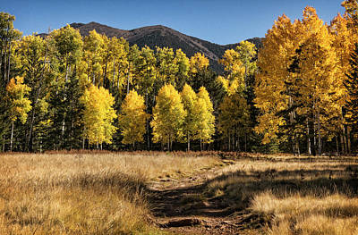 Photograph - Follow That Fall Path  by Saija Lehtonen