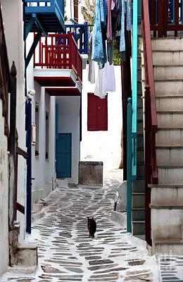 Follow The Cat In Mykonos Art Print
