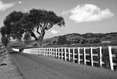 Follow The Fence Art Print by Patricia Stalter