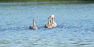 Belmont Lake State Park Wall Art - Photograph - Follow The Leader by Joan D Squared Photography