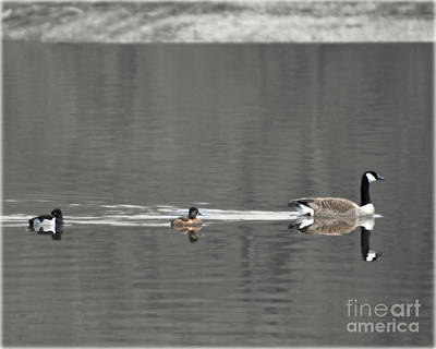 Photograph - Follow The Leader by Kathy M Krause