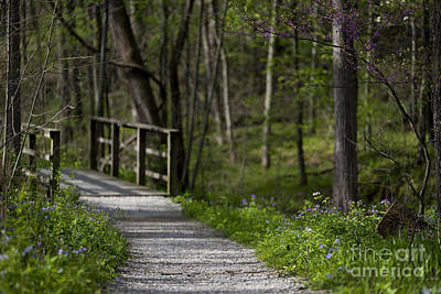 Photograph - Follow The Path by Andrea Silies