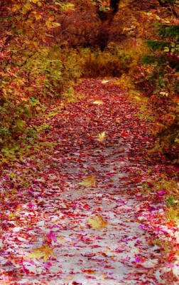 Digital Art - Follow The Path by Cathy Beharriell