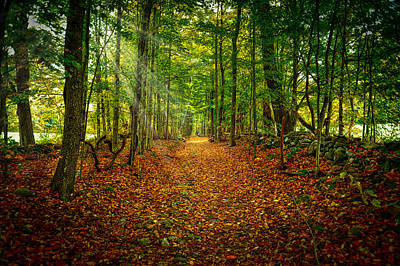 Photograph - Follow The Yellow Leaf Road by Richard Gehlbach
