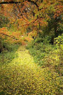 Photograph - Follow The Yellow Path by Spikey Mouse Photography