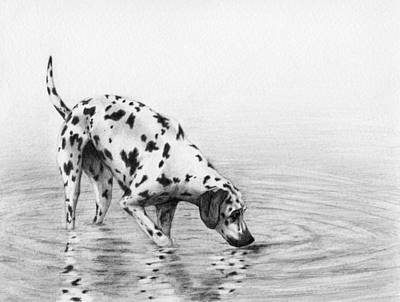 Purebred Dogs Drawing - Follow Your Nose by Stevie the floating artist