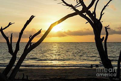 Photograph - Folly Sunrise Tree Silhouette by Jennifer White
