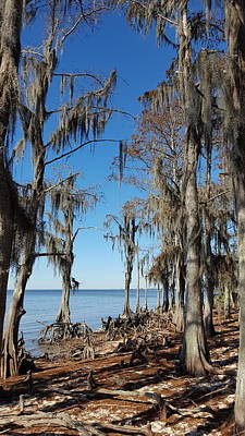 Photograph - Fontainebleau State Park - 2 by Beth Vincent