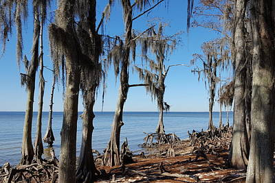 Photograph - Fontainebleau State Park - 3 by Beth Vincent