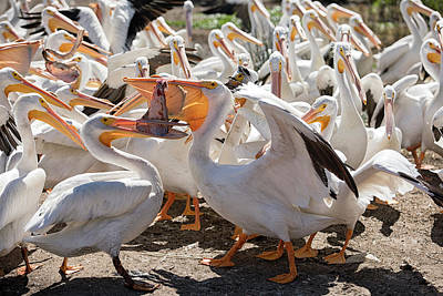 Photograph - Food Fight by Eunice Gibb