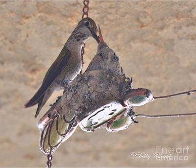 Ready To Fly Photograph - Food For The Hungry by Debby Pueschel