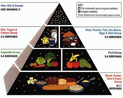 Healthy Eating Drawing - Food Pyramid by ArtworkAssociates