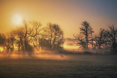 Livestock Photograph - Food Warmer by Chris Fletcher