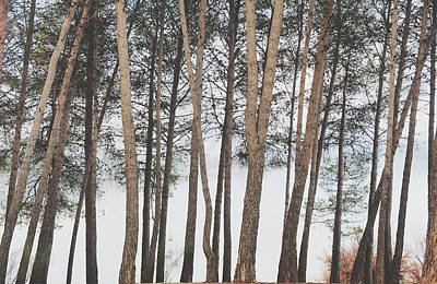 Foggy Sunrise Trees Art Print by Guido Montanes Castillo