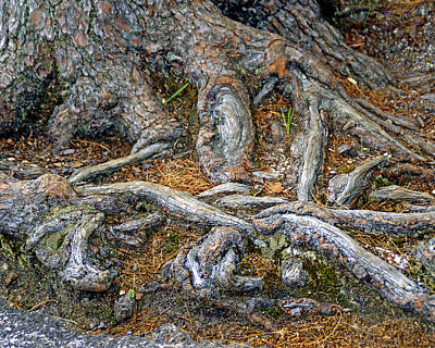 Web Of Life Photograph - Foot Of The Tree by Lynda Lehmann