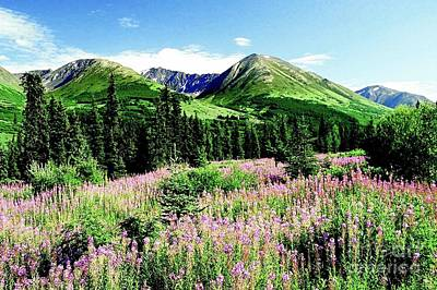 Photograph - Foothill Fireweed by Frank Townsley