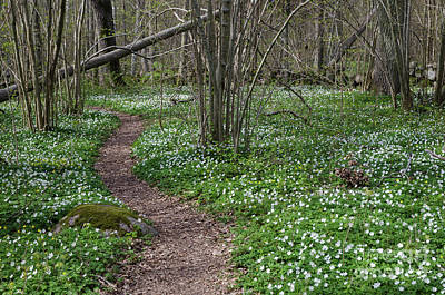 Photograph - Footpath Through A Flower Covered Forest by Kennerth and Birgitta Kullman