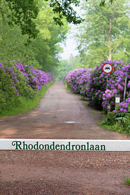 Photograph - Footpath Through Blooming Rhododendron Flowers by Hans Engbers