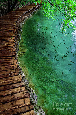 Photograph - Footpaths And Fish - Plitvice Lakes National Park, Croatia by Global Light Photography - Nicole Leffer