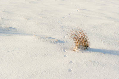Photograph - Footprints And Reeds I by Helen Northcott