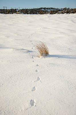 Footprints In The Snow II Art Print