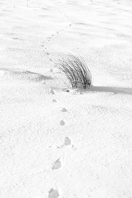 Photograph - Footprints In The Snow IIi by Helen Northcott