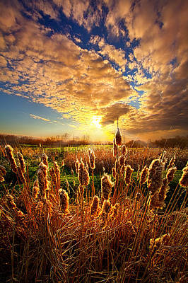 Cat Tails Photograph - For A Moment by Phil Koch