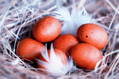 For Every Bird A Nest Art Print