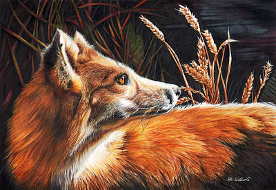 Vixen Mixed Media - For Fox Sake by Peter Williams