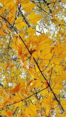 Photograph - For The Love Of Autumn by Rachel Hannah