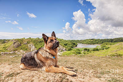 German Shepherd Dog Photograph - For The Love Of Dogs by Colin and Linda McKie