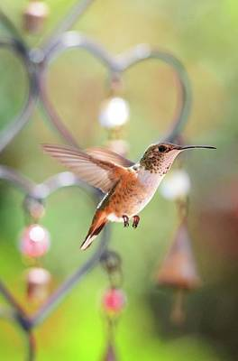 Photograph - For The Love Of Hummingbirds by Lynn Bauer