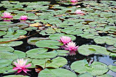 Photograph - For The Love Of Lily Pads by Jean Fry