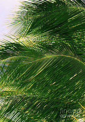 Photograph - For The Love Of Palms by Roselynne Broussard