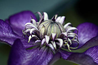 Photograph - For The Love Of Purple by Ann Bridges