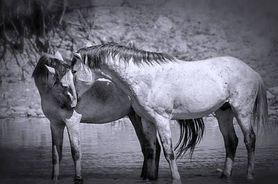 Photograph - For The Love Of Wild Horses  by Saija Lehtonen