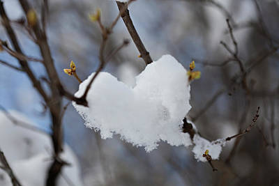 Photograph - For The Love Of Winter by Jennifer Karon
