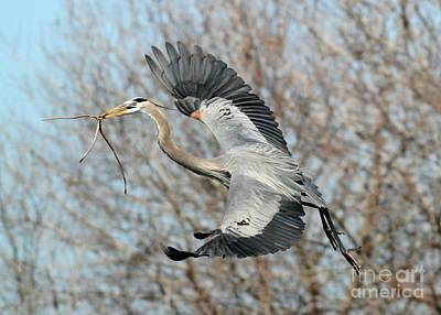 Heron Photograph - For The Nest Too by Sabrina L Ryan
