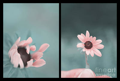 Photograph - For You - Diptych by Aimelle