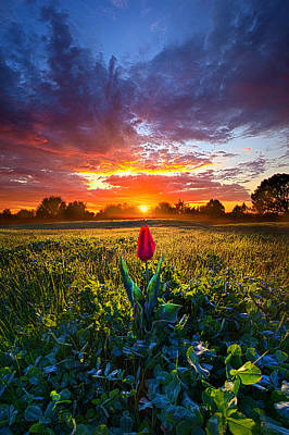 For Your Love Art Print by Phil Koch