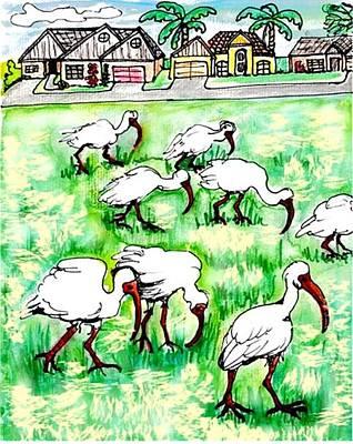 Foraging Ibis Art Print