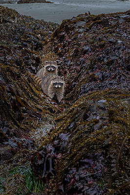 Photograph - Foraging by Thomas Hall
