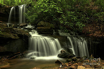 Photograph - Forbes Forest Cascades by Adam Jewell