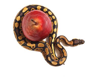 Forbidden Fruit Art Print by John Mueller