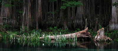 Cypress Swamp Photograph - Forbidden Swamp by Matt Tilghman