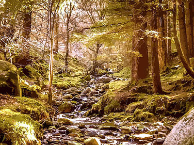Water Filter Mixed Media - Magnificent Forest Stream by Clive Littin